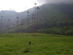 Hike under Salento's Wax Palms in Colombia.