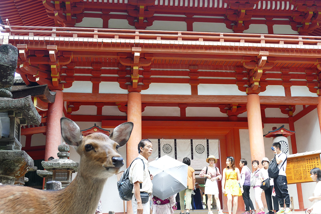 Deer at Nara on a Day Trip from Kyoto, Japan's Treasure Box