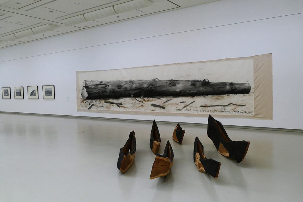 David Nash's wooden sculpture Black Light : White Shadow - A Stream of Souls in front of his painting Larch Lying on a Slope.