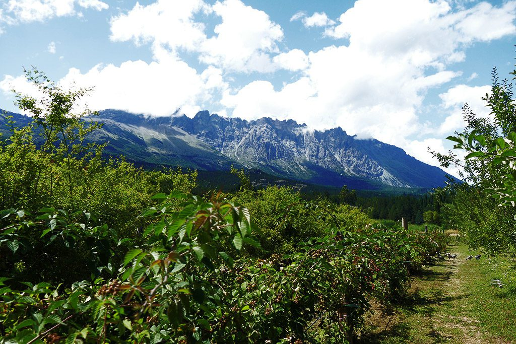 Fruit Trees against the backdrop of a Mountain Ridge