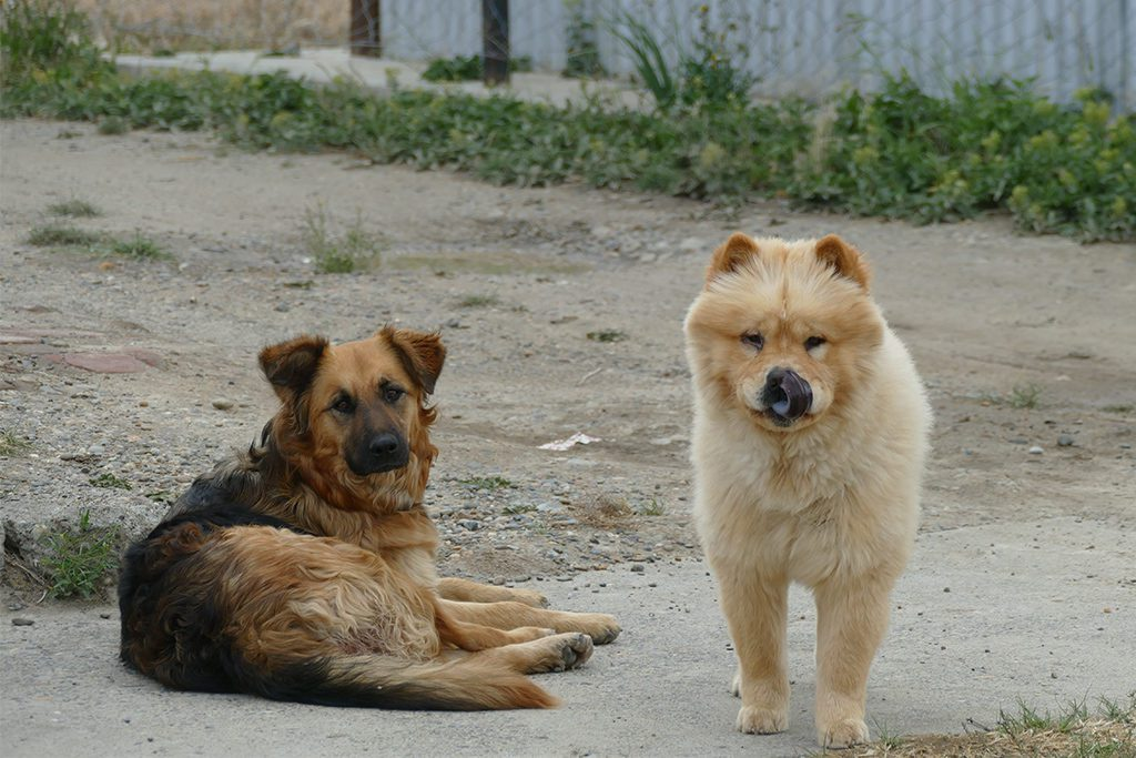 Dogs in Puerto Santa Cruz in Argentina