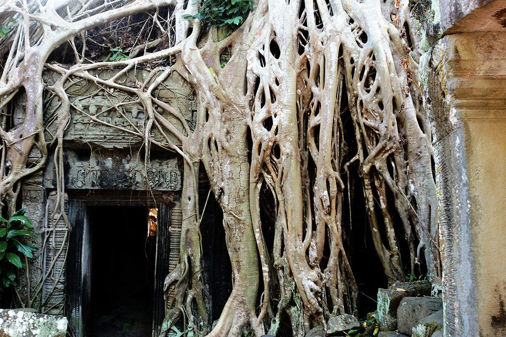 Ta Prohm with powerful roots