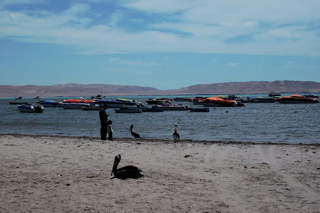 Pelicans relaxing on the city beach of Paracas.