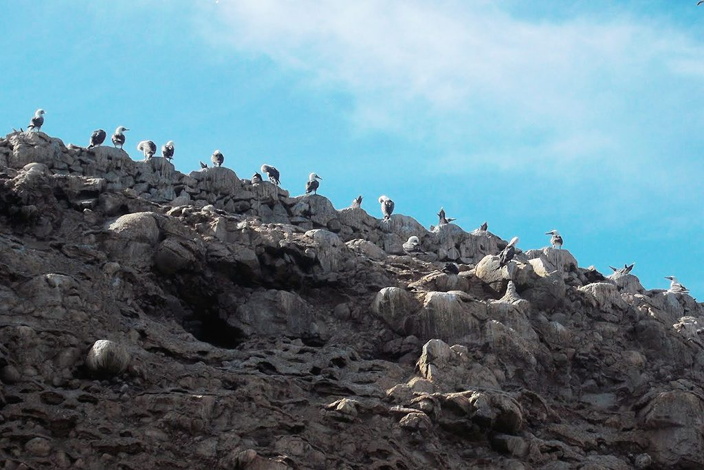 Flock of birds on Islas Ballestas
