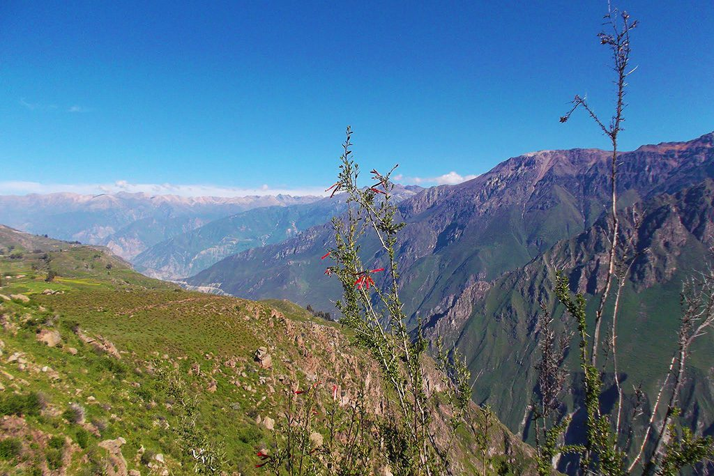 Majestic vastness of the Colca Canyon.