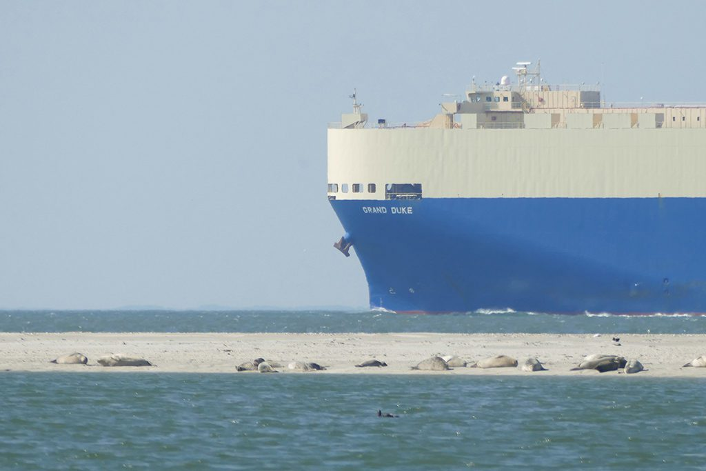 Seals on a Sandbar and a Tanker passing by off the shore of the island of Borkum.