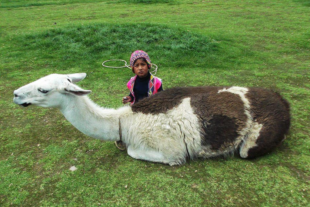 Child and Llama in Peru