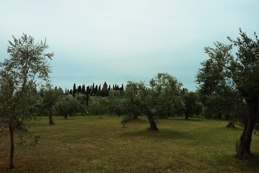 Olive Grove in Sirmione