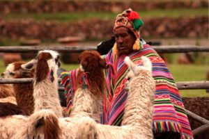Man with Llamas in Peru