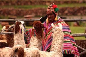 Man with Llamas in Peru