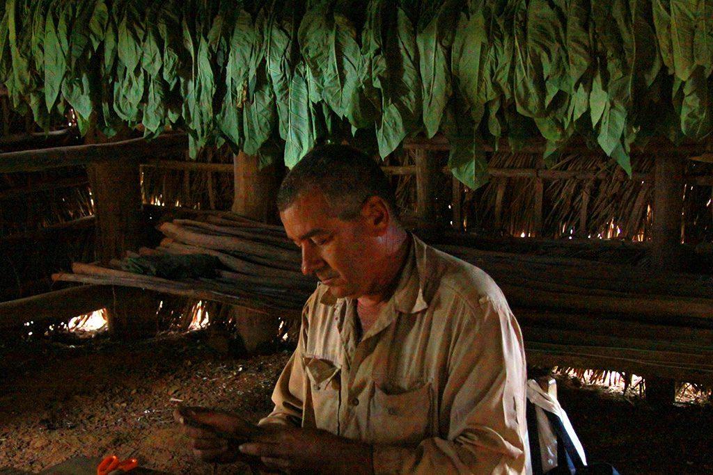 Man manufacturing cigars at Vinales, Cuba 's Rural Paradise