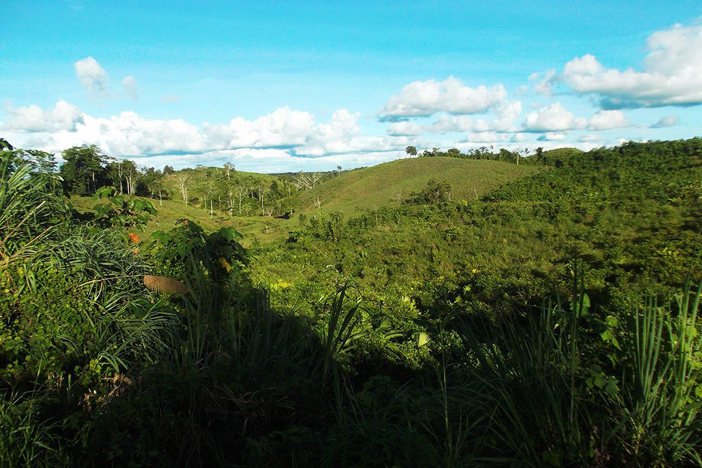 Wild sceneries at the Padre Abad province in the department of Ucayali