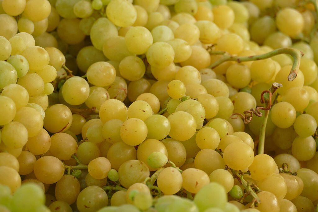 Grapes on the farmers market in La Spezia