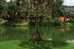 Spotting Hélio Oiticicia's Invenção da cor, Penetrável Magic Square # 5, De Luxe across one of various ponds at INHOTIM Botanic Garden and Gallery.
