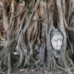 Buddha head embedded in a Banyan tree at Wat Mahathat in Ayutthaya