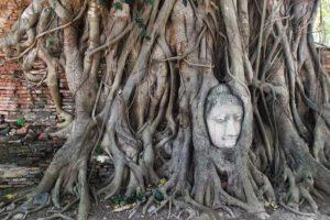 Buddha head embedded in a Banyan tree at Wat Mahathat in Ayutthaya