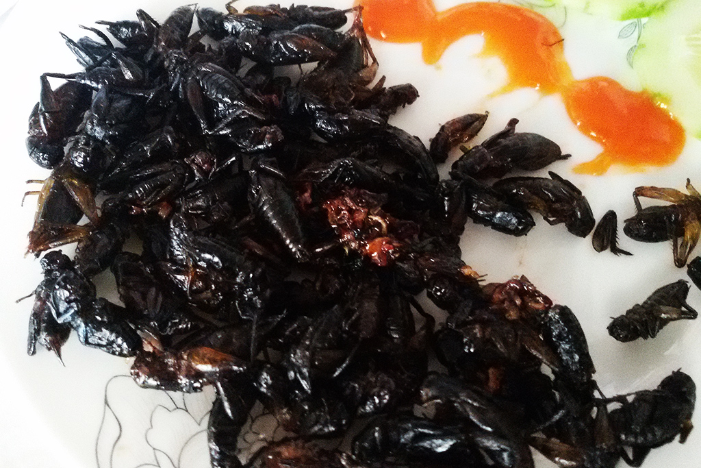 Grilled bugs in Vietnam