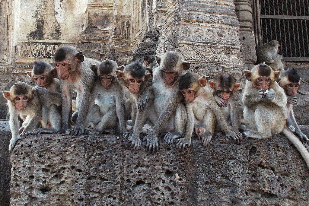 Group of baby monkeys at Wat San Phra Karn in Lopburi