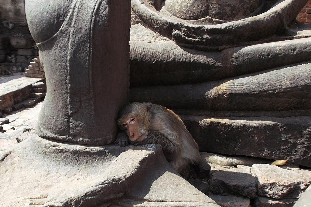 Monkey in Lopburi