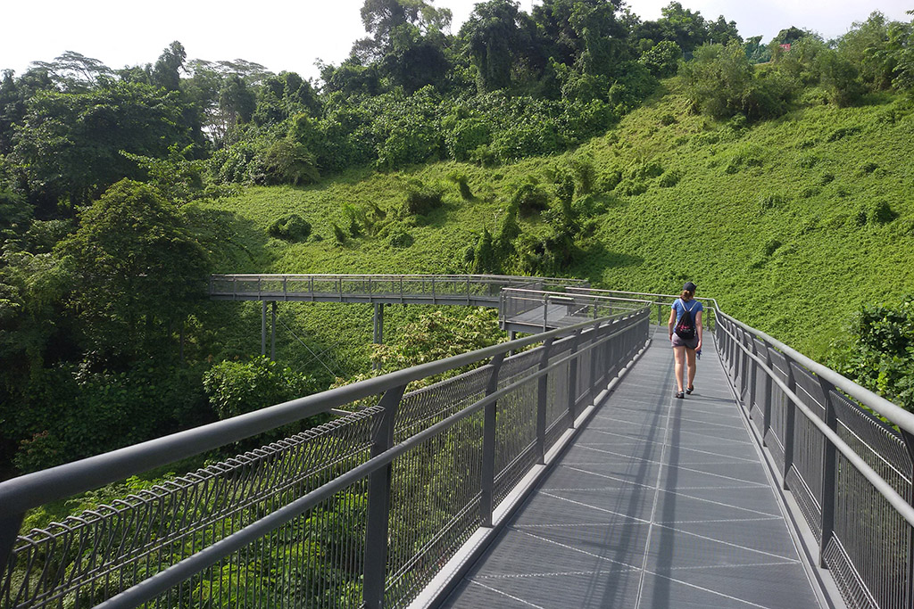 Canopy Walkway at the  Telok Blangah Hill Park in Singapore