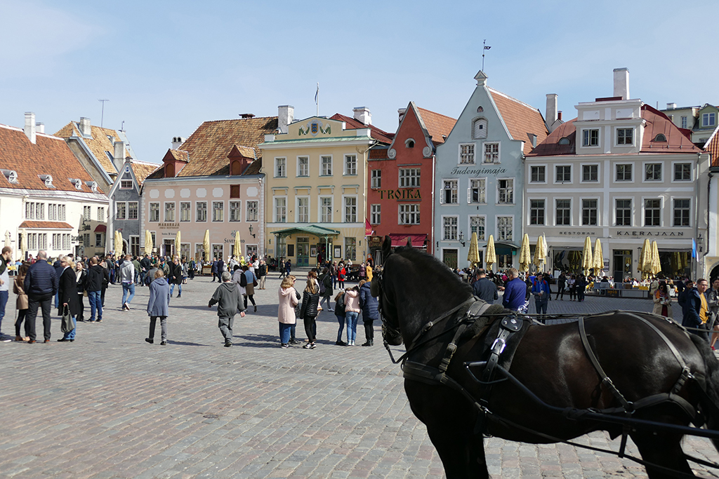 The center of attention: The medieval Raekoja Plats, Tallinn's town hall square.