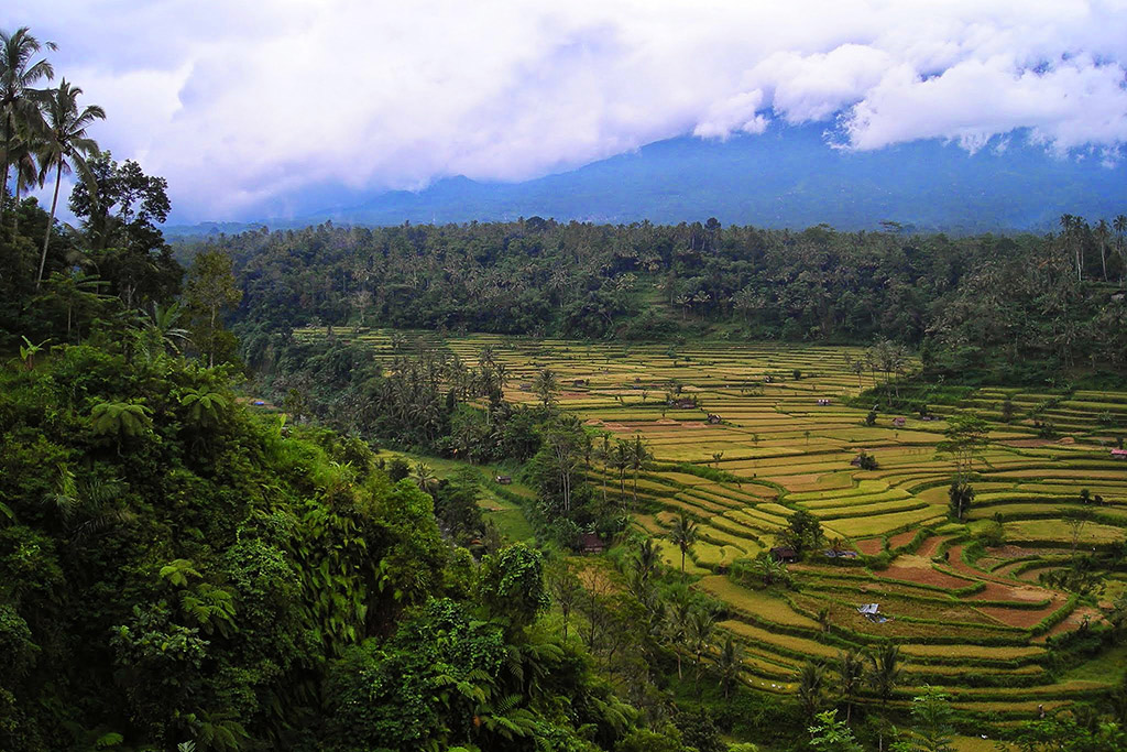 Tegallalang rice terraces not far from Ubud