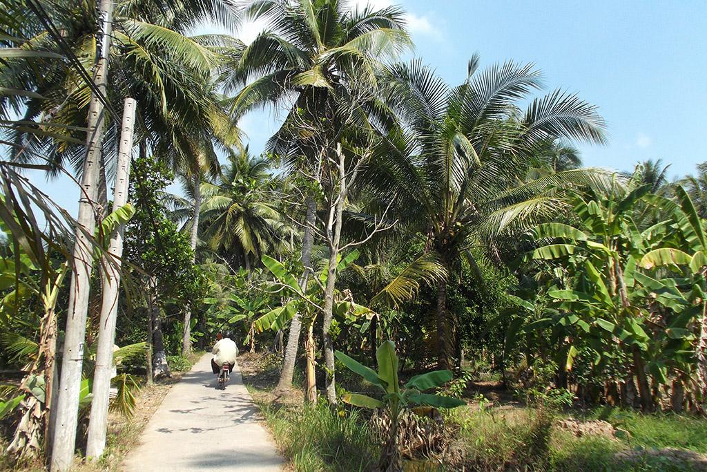 Trail at the Mekong Delta
