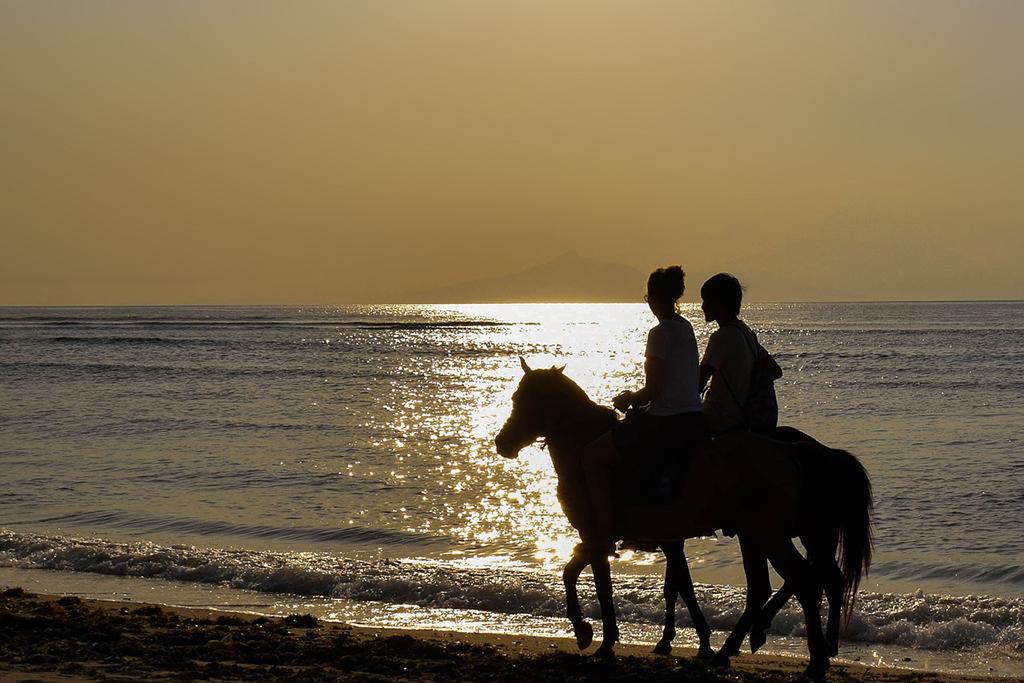 Horses in the Sunset on Gili Trawangan