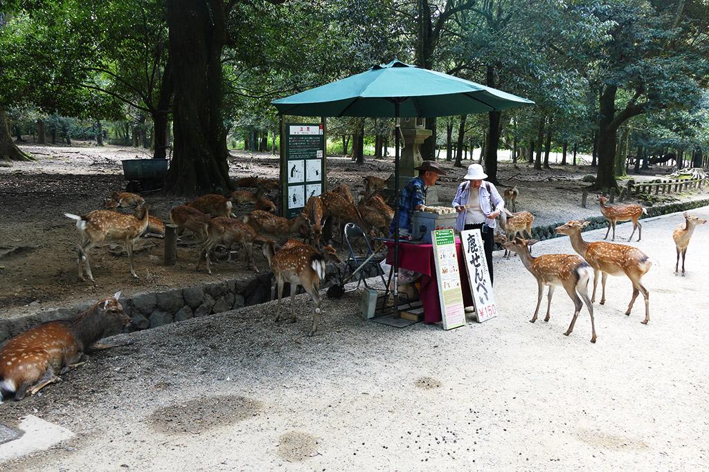 Deer at a food stand at the park in Nara