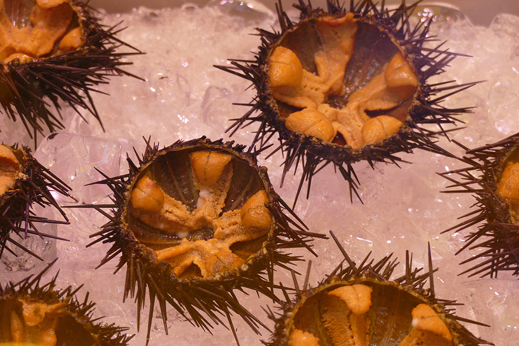 Urchins at the market in Tokyo