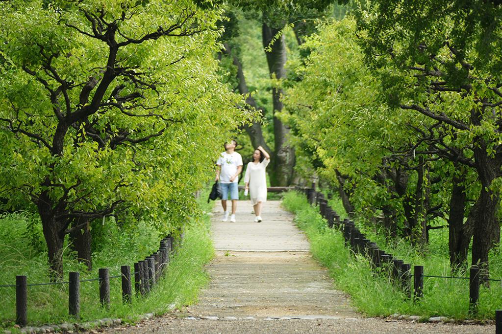 The plum grove in Osaka