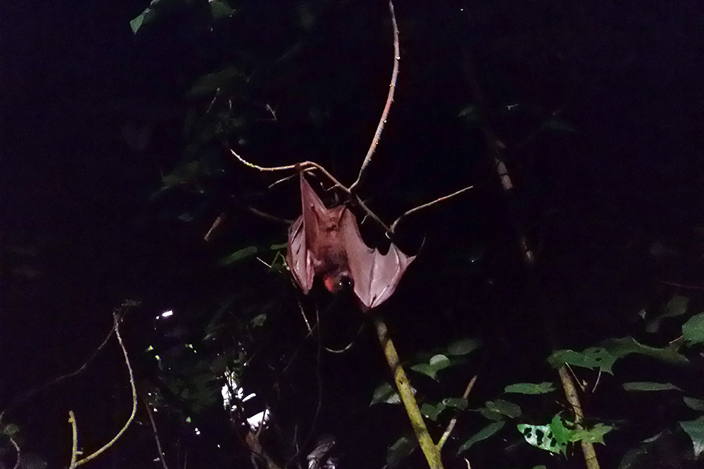 Bat at the Night Safari in Singapore