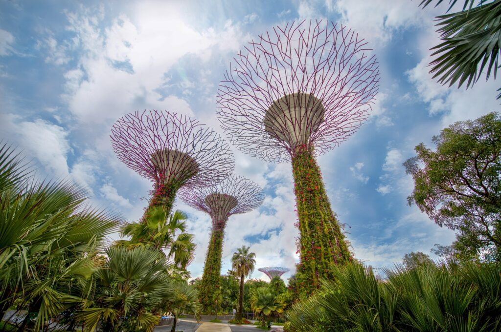 Supertree Grove at the Gardens by the Bay in Singapore