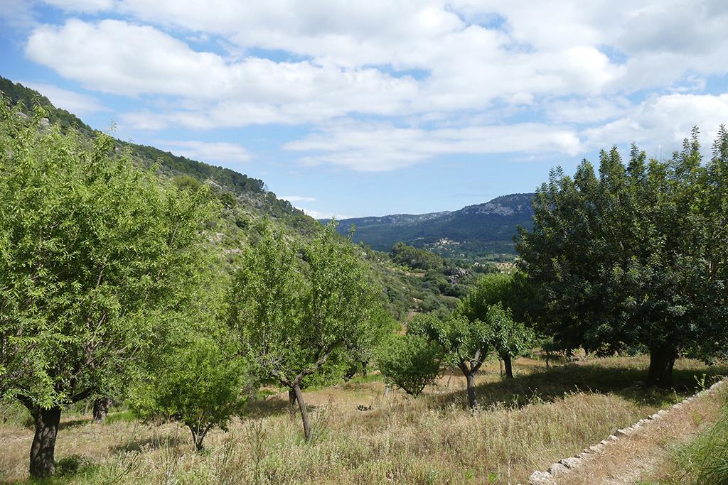 View of Puigpunyent