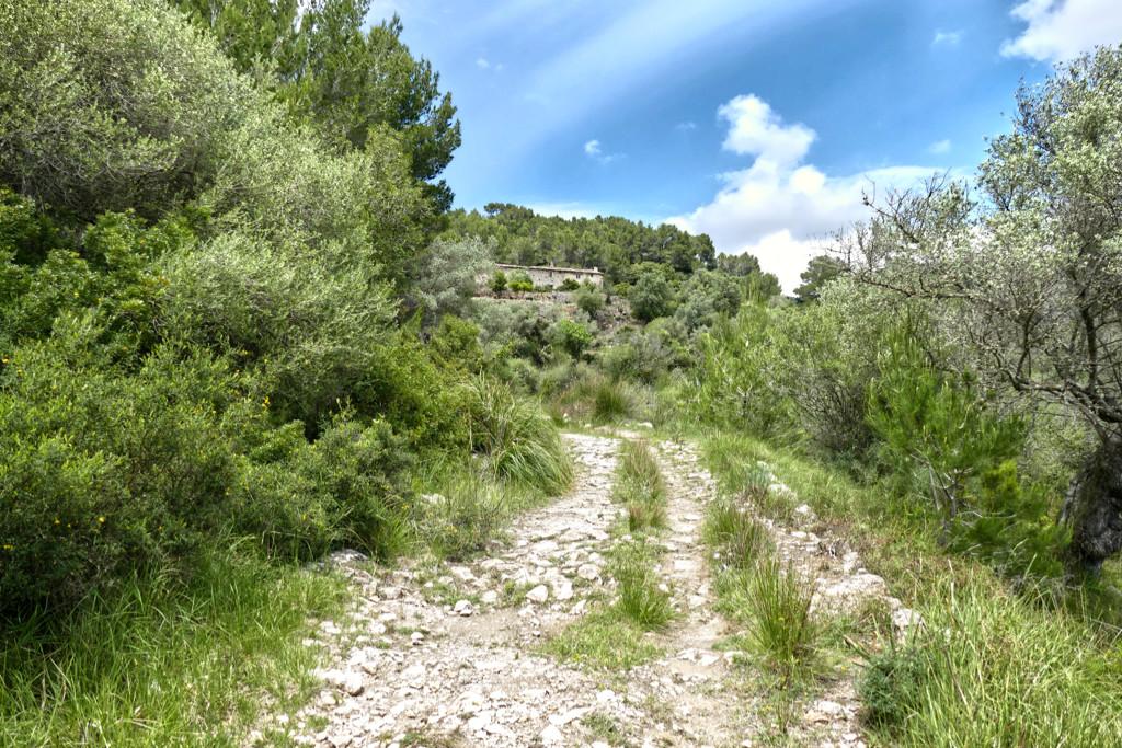 Hiking trail near Puigpunyent