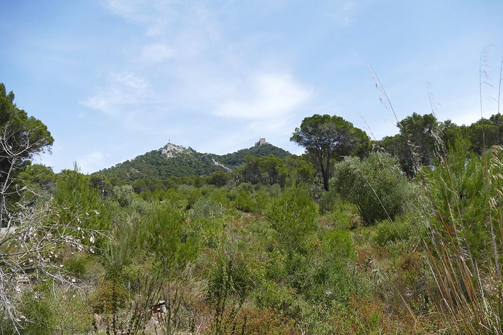 Puig des Milá and Puig Sant Salvador