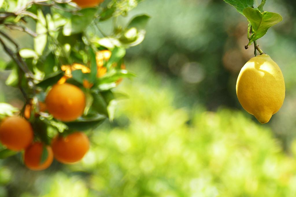 Lemon and oranges.