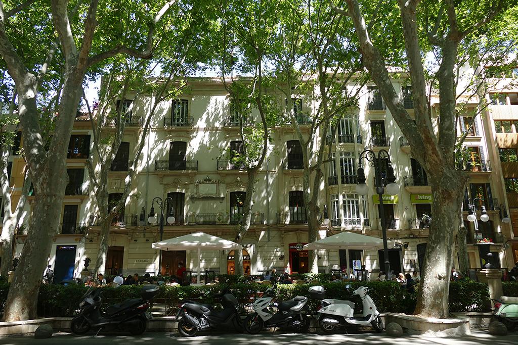 Passeig del Born in Palma de Mallorca