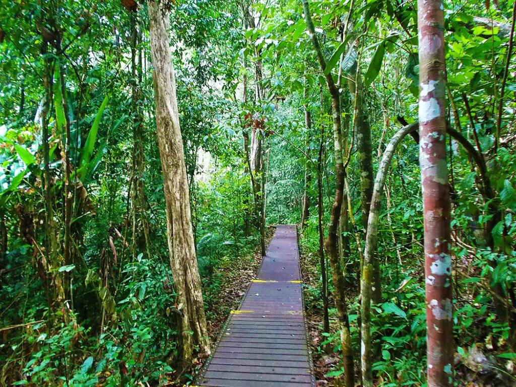 Trail through the Taman Negara
