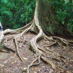 Guide to the TAMAN NEGARA, Malaysia's Garden Eden