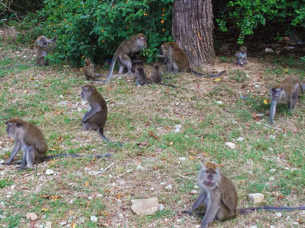 Monkeys at a bus station in Kuantan