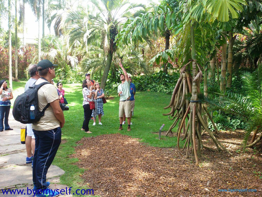 Guided tour through INHOTIM Botanic Garden