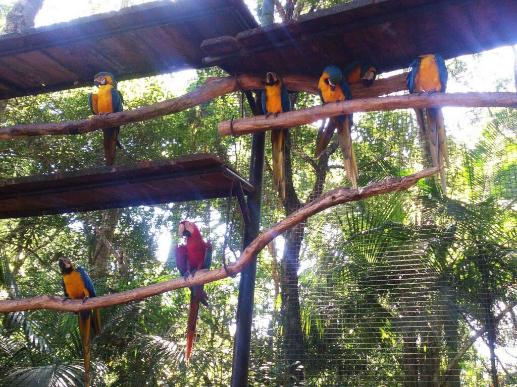 Aras at the bird park in Foz do Iguacu.