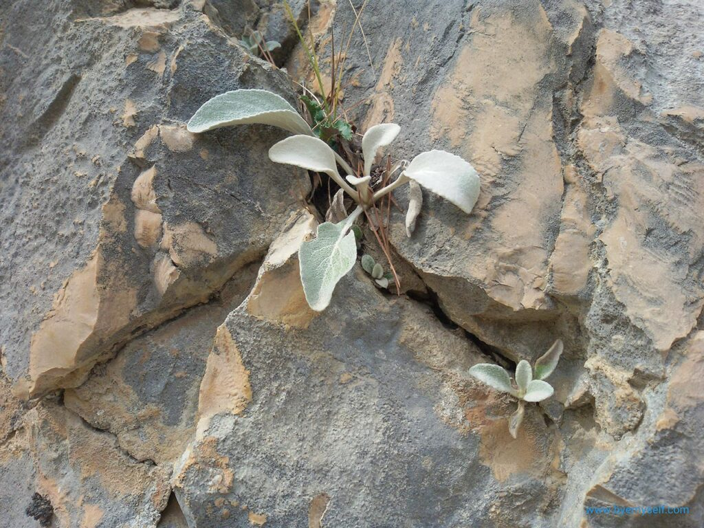 Plant growing between Rocks on the way from Skradin to Krka