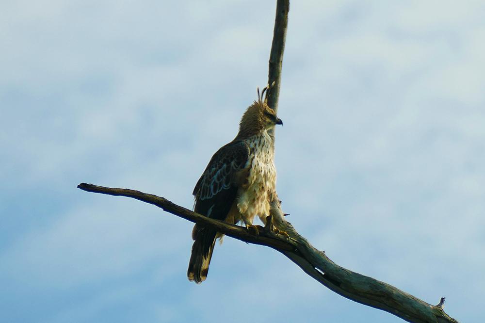 Bird in Uduwalawe