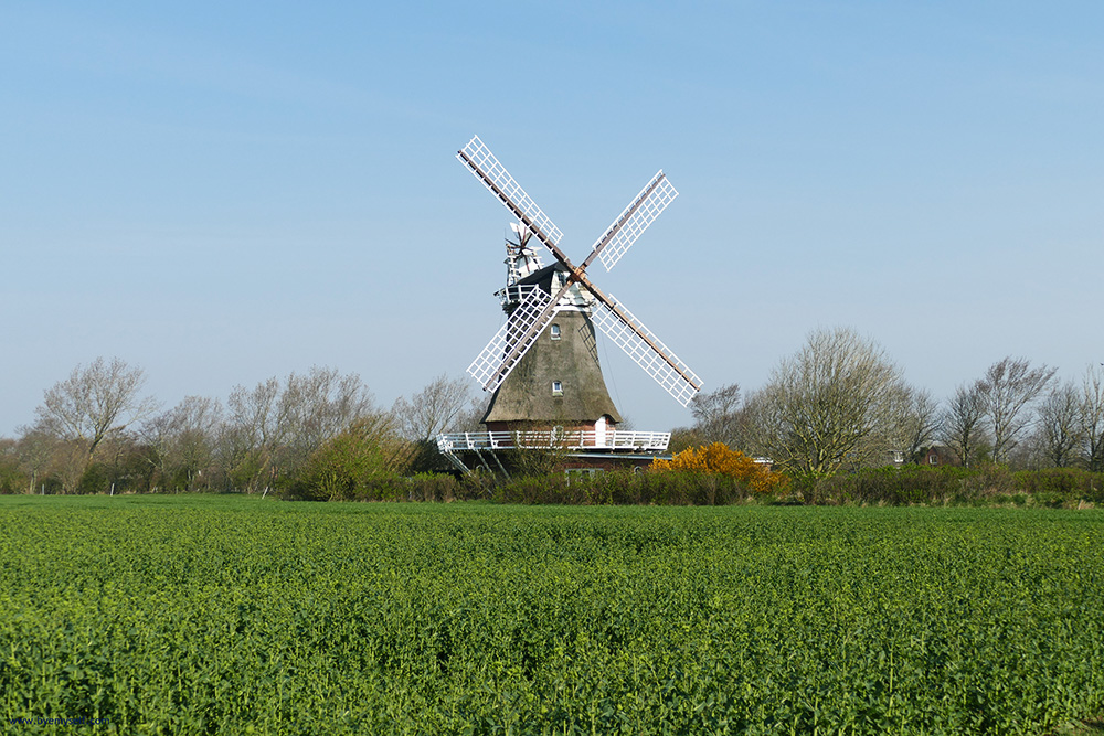 The thatched mill is Oldsum's most visible landmark.