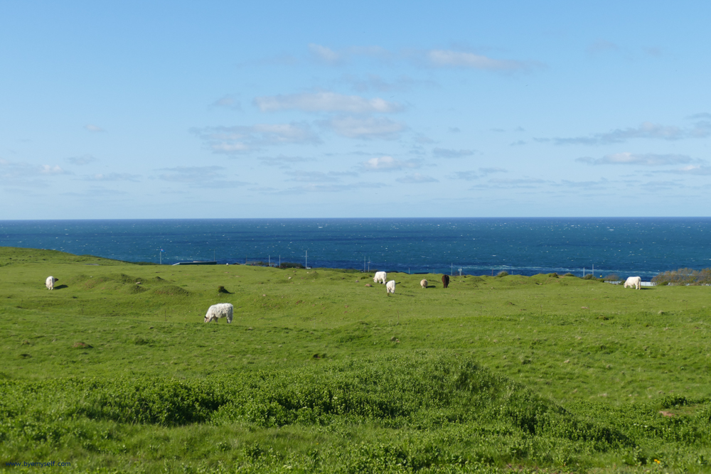 Pastures on the island of Heligoland