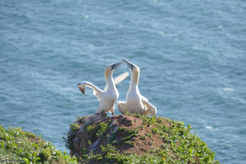 Birds on Heligoland