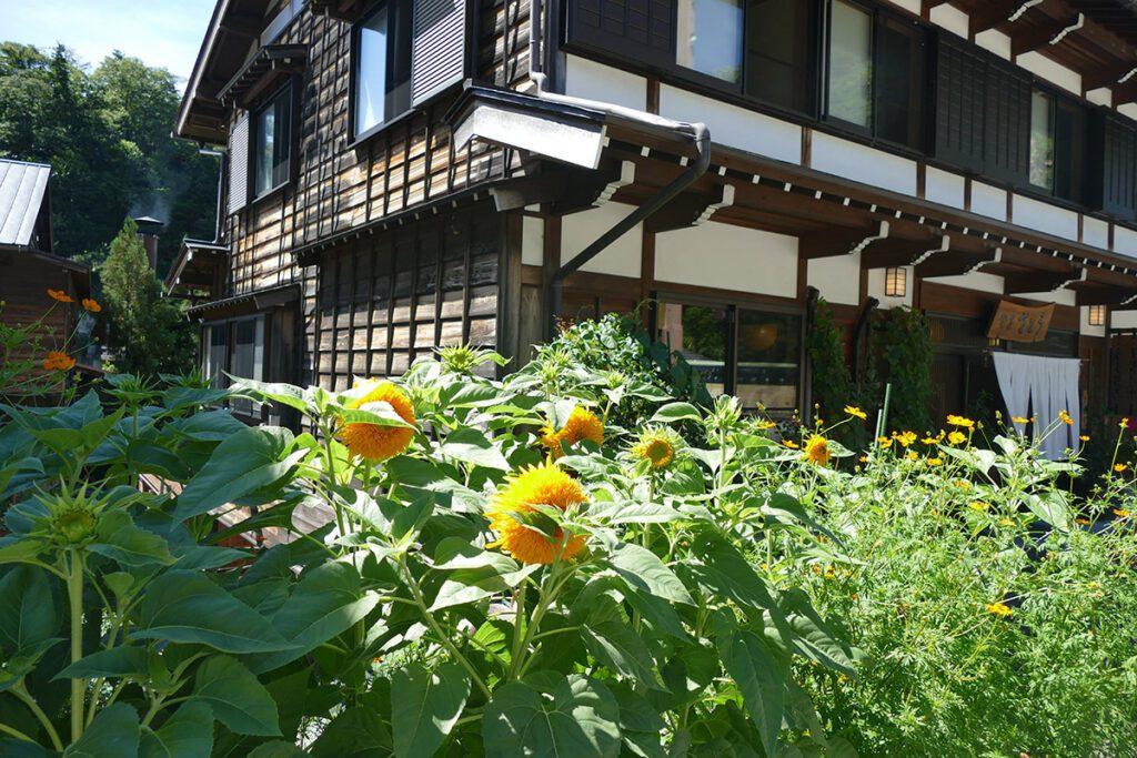 Sunflowers at Shirakawago