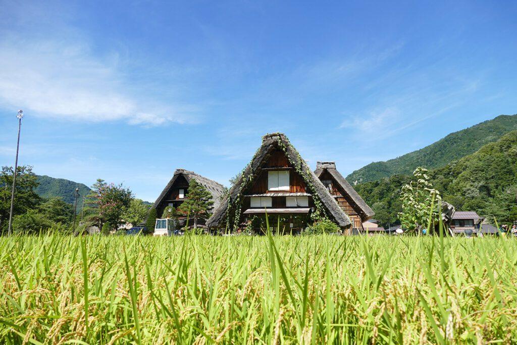 Gassho-zukuri houses in Shirakawago